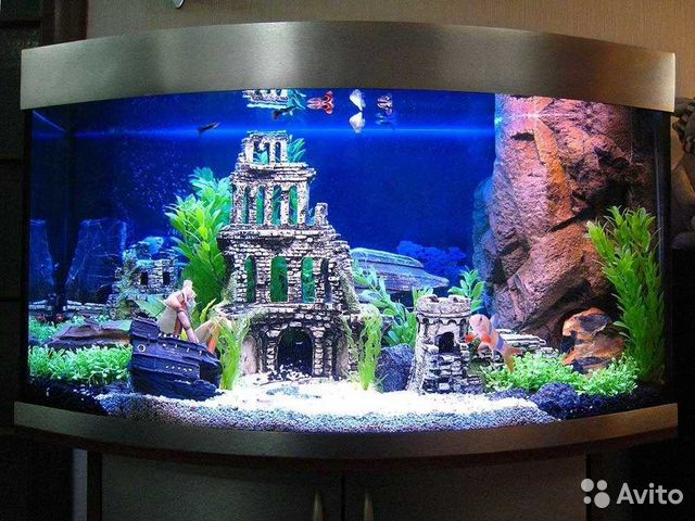Виды аквариумов для дома фото