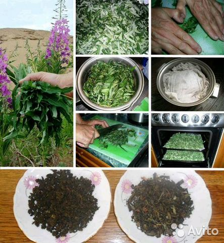 Как заготовка иван чая