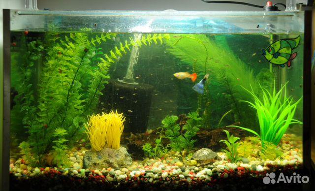 Aquarium fish tank for sale in bangalore dating