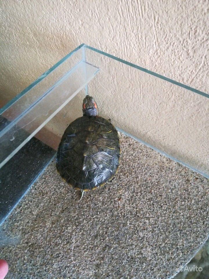 Черепаха с аквариумом в Новосибирске - фотография № 4
