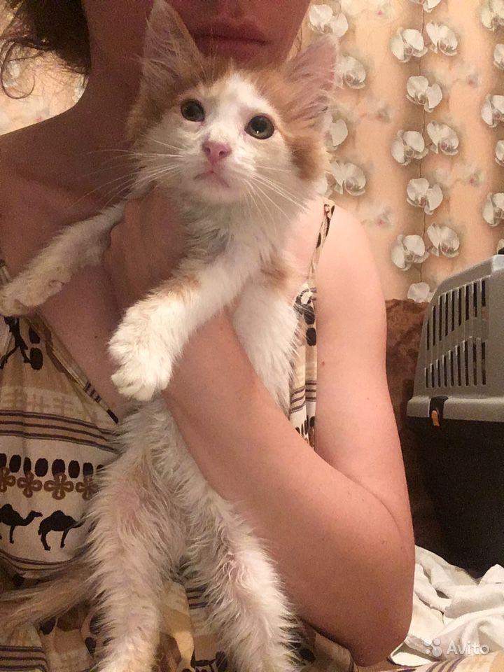 Котёнок Рыжик ищет дом