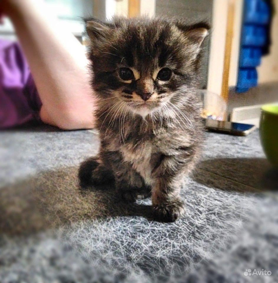Ищу самых любищих родителей для чудесных котят