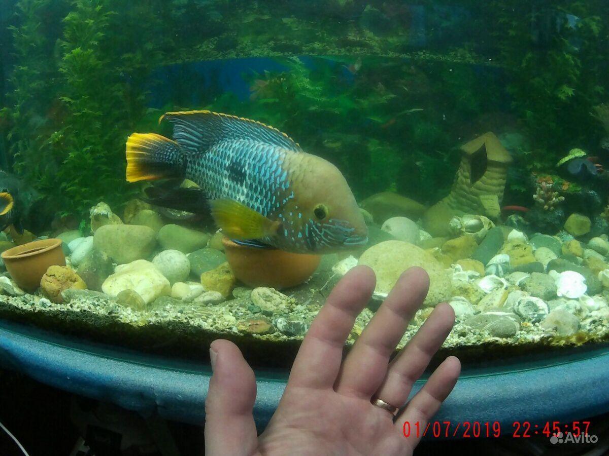Аквариум рыбки продать купить на Зозу.ру - фотография № 1