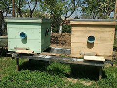 Ящики для пчёл