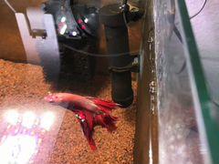 Отдам аквариумных рыбок