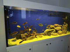 Продается аквариумный комплекс