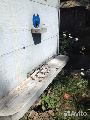 центре Сочи, продажа пчел на авито курская область улице