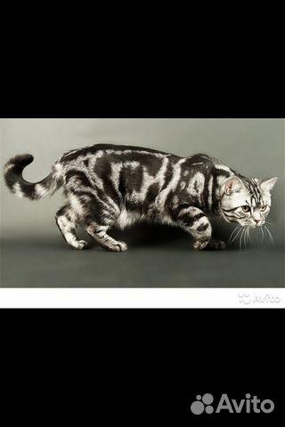 Авито коты вязка ижевск