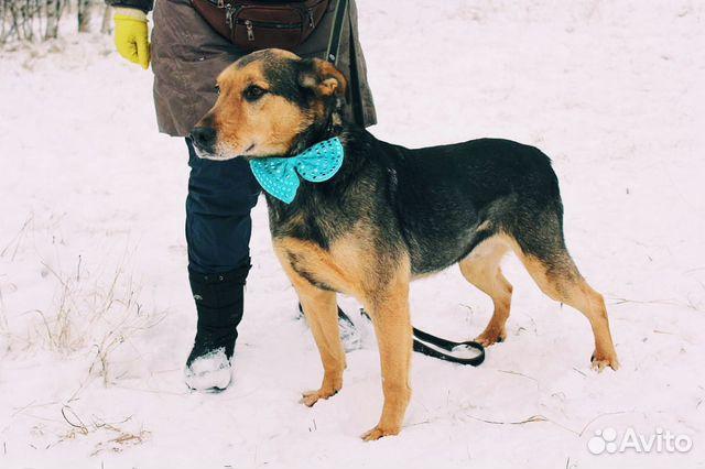 Взрослый пёс из приюта в дар купить на Зозу.ру - фотография № 6