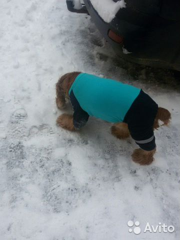 Cargo pants for dogs 89513124141 buy 2