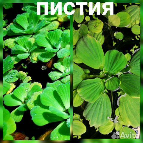 Аквариумные растения - 9 шт  89519173738 купить 3