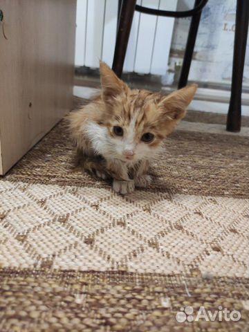 Кошка  89787486097 купить 1