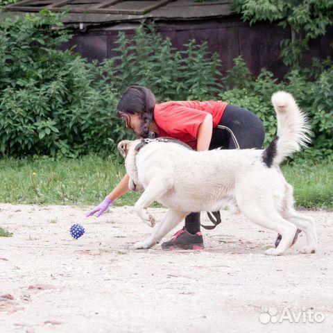 Отдается щенок-подросток в добрые руки  89036455444 купить 3
