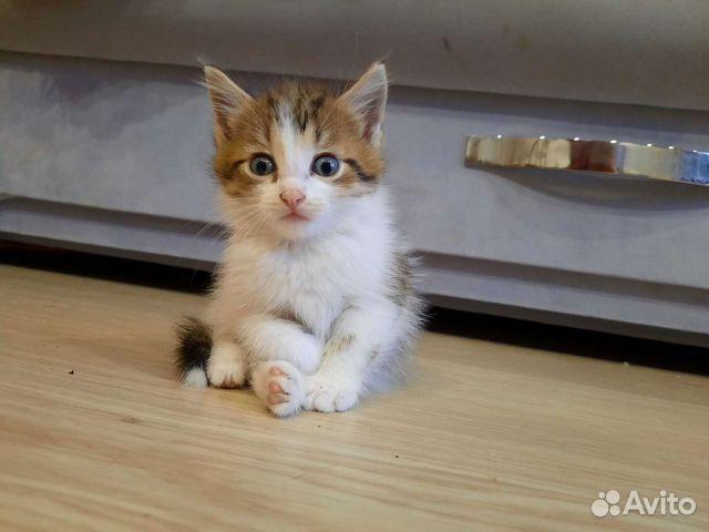 Кошка  89137414312 купить 2