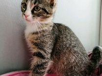 Девочка котенок с грустными глазами в добрые руки