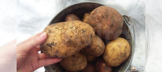 Продается картофель