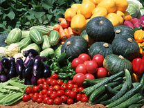 Натуральное удобрение,навоз.Готовь огород осенью