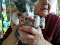 Котята в доброе руки